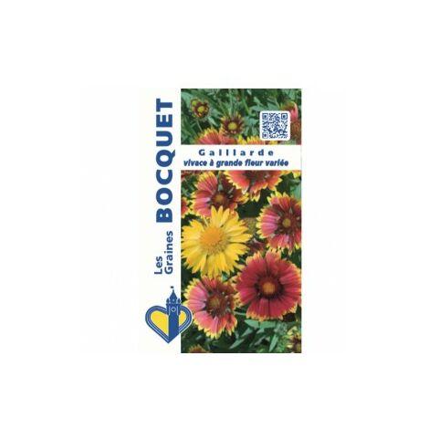 Gaillarde vivace à grande fleur variée - 1,5g