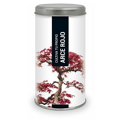 """main image of """"Garden Pocket - Kit di coltivazione bonsai acero rosso."""""""