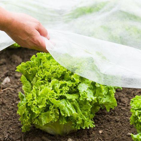 Gartenvlies für Frühbeete | Gartenvlies für Frühbeete 10x1,5m weiß
