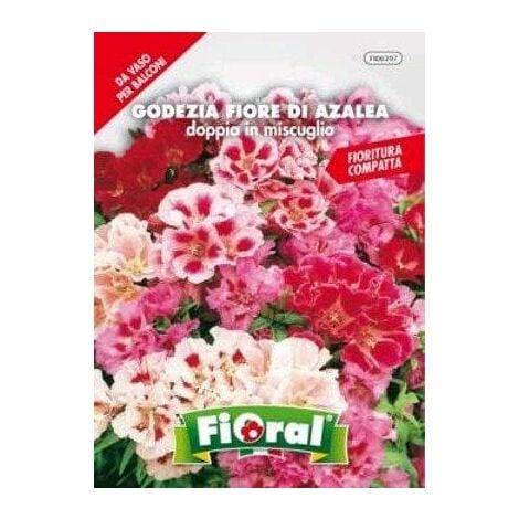 Godezia Fiore di Azalea Doppia in Miscuglio - Fioral