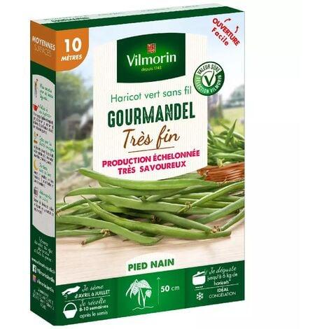 Graines de Haricot nain vert Gourmandel - 10 mètres