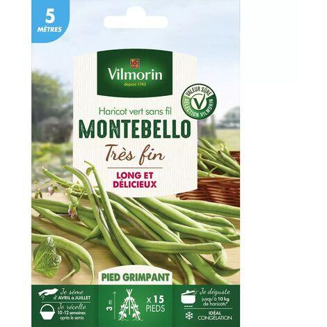 Graines de Haricot vert sans fil Montebello très fin - 5 mètres - Vilmorin