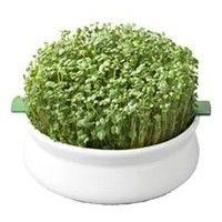 graines germées de cresson(15g)