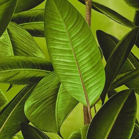 Green Neue Bude Palm Vinyl Wallpaper Plant Leaves Paste The Wall A.S Creation