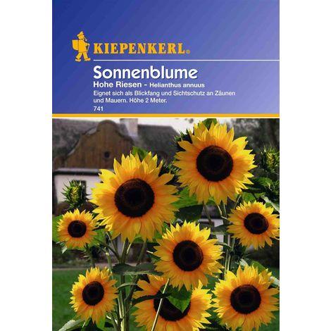 Helianthus Sonnenblume Hohe Riesen gelb