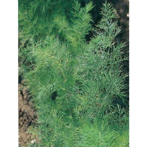 Baumbehang Blüten Ø ca 3,5 cm NEU Baumbehang Ostern Frühling Holzblume Seiffen