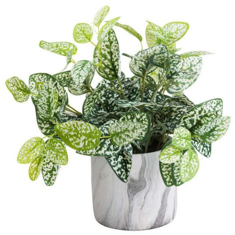 Hill Interiors Variegated Artificial Nerve Plant (One Size) (Green)