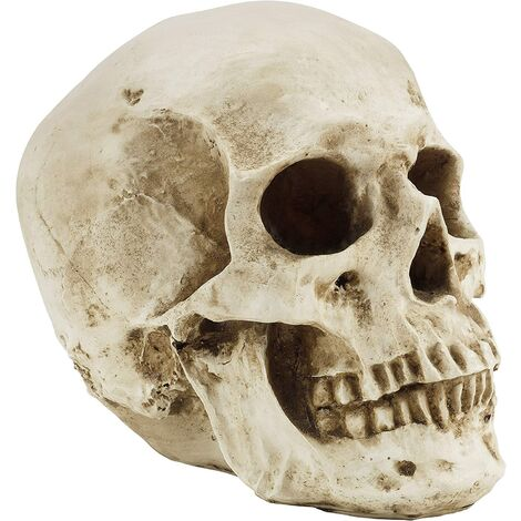 Human Skull Model - Realistic Resin Bone Medical Skeleton - Replica Life-Size Head for Anatomical Medical Teaching & Halloween Party Decoration