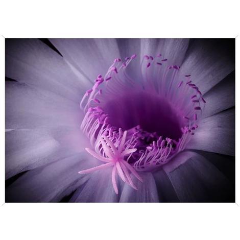 Image Encadree Baguette Minimaliste Fleur Lilas Mdf 51x71 Cm