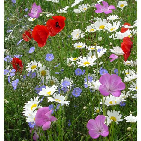 Mezclas de flores