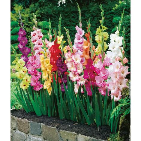 Bulbi di fiori