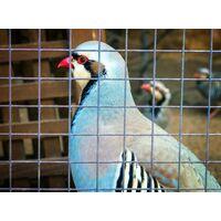 75 m x 1m grillage pour volière, grille métallique, grillage soudé, clôture en fil de fer, galvanisé à chaud
