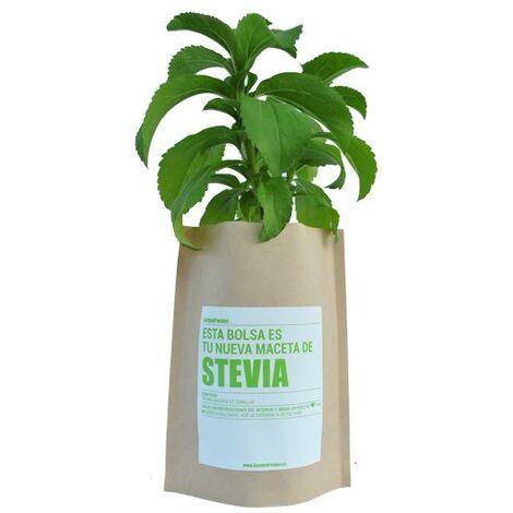 Kit huerto Stevia Garden Pocket
