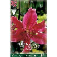 Bulbo Lilium Oriental Rojo 16/18 20 unidades