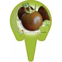 Plantón ecológico de Tomate Negro maceta 10,5 cm de diámetro