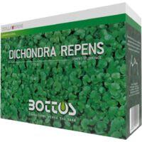 Semi per Prato Bottos Dicondra Kg 1 Tappeto Verde Giardino