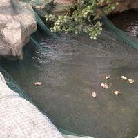 Hommoo Pond Cover Net 6x8 m PE
