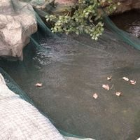 Hommoo Pond Cover Net 8x8 m PE