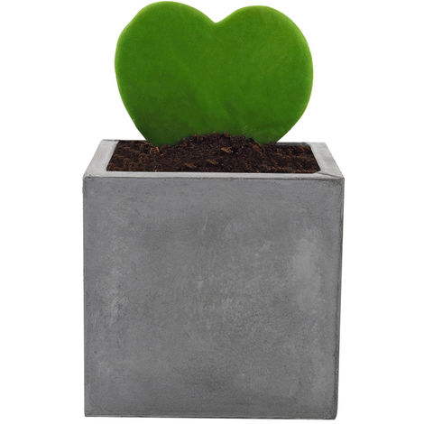 Concrete Plant Flower Pot With Drainage Hole Garden Patio Balcony Planter Pot Square 19x19x19 cm Grey