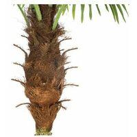 Palmier artificiel - H 180 cm - Livraison gratuite