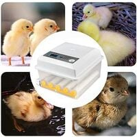Incubateur Oeufs Couveuse a Oeuf Automatique pour volaille, caille, oie Canard, Pigeon, Reptile - 16 oeufs