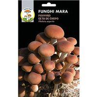 Semi Micelio Essiccato Funghi Pioppino 100 Gr, Pholiota Aegerita