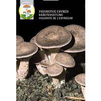 Funghi Mara Micelio Essiccato Fungo Cardoncello