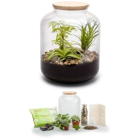 Kit terrarium plantes Bonbonne mix S (24 x 31 cm)