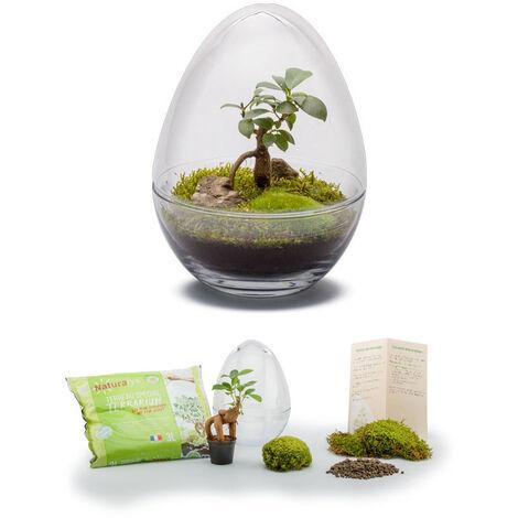 Kit terrarium plantes Diplo S (24 x 17 cm)