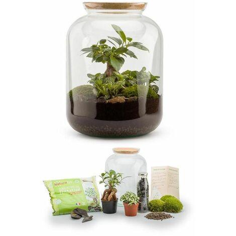 Kit terrarium plantes Bonbonne S (25 x 31 cm)