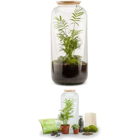 Kit terrarium plantes Bonbonne L (23 x 51 cm)
