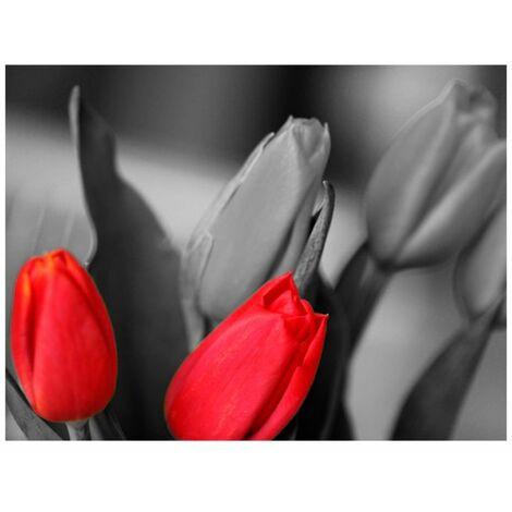 Papier peint - Tulipes rouges sur fond noir et blanc .Taille : 250x193