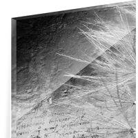 Crédence en verre - Dandelion Black & White - Panorama Dimension: 40cm x 100cm