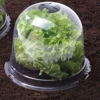 Cloches à salades plastique - Lot de 6 translucide 21 - translucide