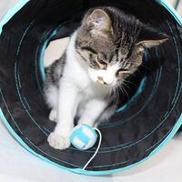 Tunnel Chat Jeu Chat Tunnel Lapin Pet Tunnel Tube de Tunnel Pliant Chat Tunnel Jouets Tunnel pour Les Chats Lapins, Chiens, Animaux de Compagnie