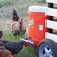 Nourrir les tasses à boire de l'eau de buveur de poulet de volaille automatique de poulailler 5pcs