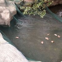 Pond Cover Net 8x4 m PE3637-Serial number
