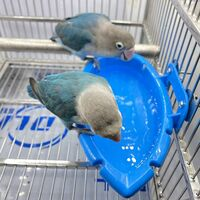 Perle rare Parrot Baths Parrot Cages Birds Baths Hanging Bath Accessories Automatic Feeders Bird Cage Accessories