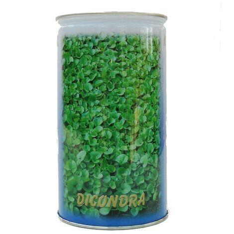 Seme da prato Dichondra Repens Conf. 500 gr.