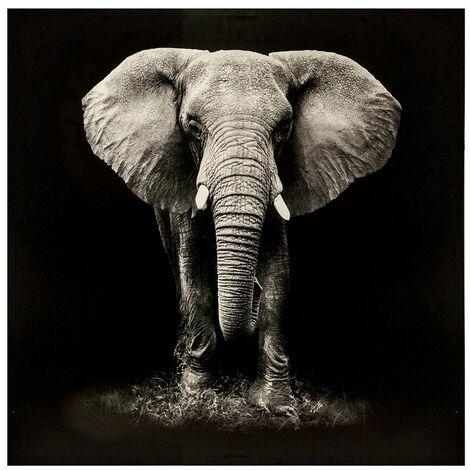 Tableau Éléphant - Atmosphera - Noir