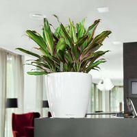 LECHUZA Planter Classico 28 LS ALL-IN-ONE High-Gloss White 16040 - White