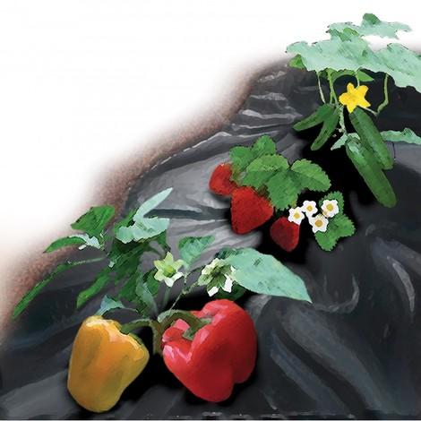Bache anti mauvaise herbes 1,5x5m 100g/m2, noir,UV+