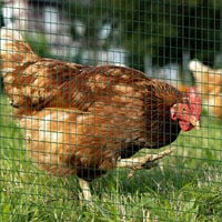 Pawhut PVC Coated Welded Wire Mesh Fencing Chicken Poultry Aviary Fence Run Pet