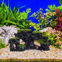 Pierre déco d'aquarium, apparence naturelle, cachette, grotte, accessoire d'aquarium, 8,5x17 cm, noir-vert