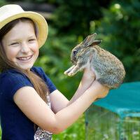 Enclos avec couverture en filet, lapins, cochons d'inde, extérieur, élevage, 60,5x160x160cm, argent