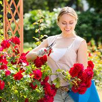 Relaxdays Wooden Rose Arch, Decorative Pergola, 2 Planter Boxes, Weatherproof Trellis, 209 x 181 x 60 cm, Orange