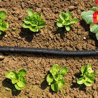 Choisir un goutte à goutte pour le jardin facile à installer