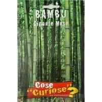 Semi di bambu gigante moso bamboo arredo giardino