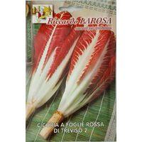 Semi di cicoria a foglie rossa treviso buste sigillate seme orto frutta cicorie