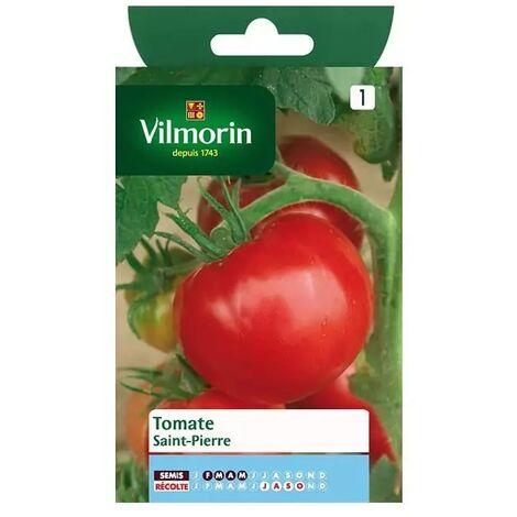 Sachet graines Tomate Saint Pierre